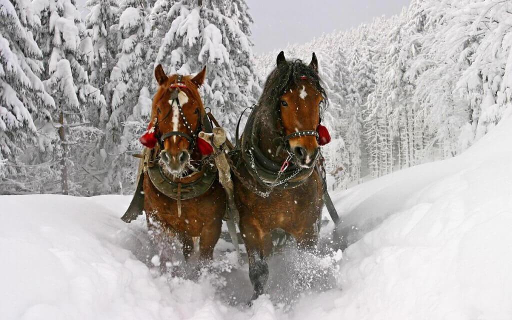 Вишкіл із їзди верхи на конях з елементами керування саньми відбудеться 18-19 лютого поблизу м. Черкаси