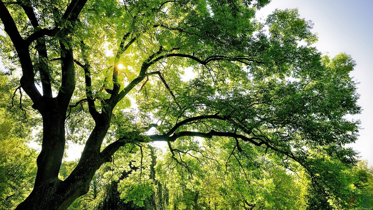 Долучайтеся до акції від екологічної служби Пласту #Пластуни_рятують_дерева!